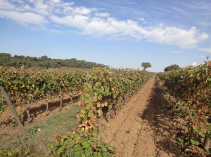 Abbaie de Fontfroide vineyard, near Narbonne