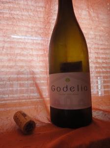 41 - Godelia